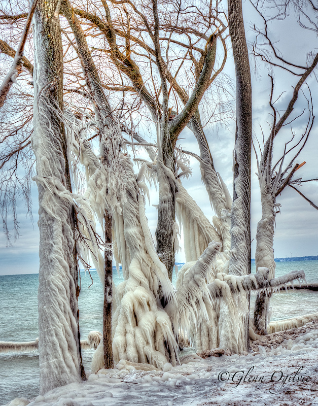 Winds and waves spray combined with cold temperatures to rime these tree on the Lake Huron shoreline in Sarnia.